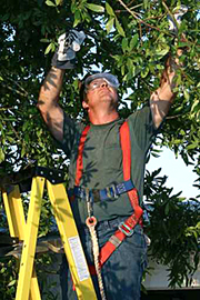 Davie Tree Service Weston FL