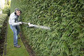 Davie Hedge Trimming and Cutting - Weston, Cooper City